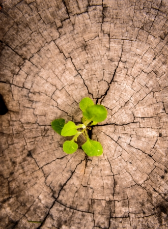 renewal: little tree on Stump  New development and renewal as a business concept