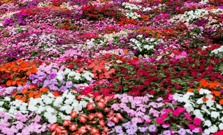 Pretty manicured flower garden with colorful flower photo