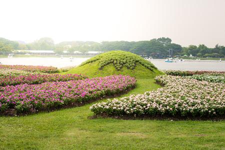 berros: flores de berro de color rosa en el jard�n Foto de archivo