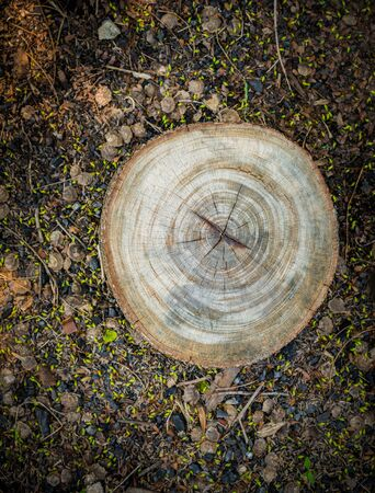 stumped: Top view of tree stump on the ground