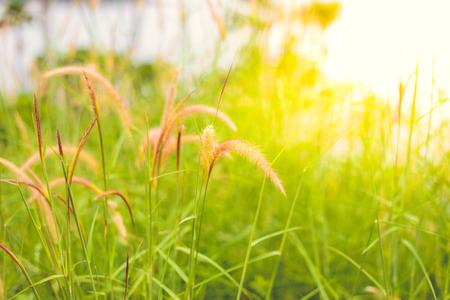 colores calidos: flor de la hierba en la naturaleza con colores de tono cálido