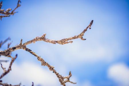 sky background: Sticks and twigs on sky background Stock Photo