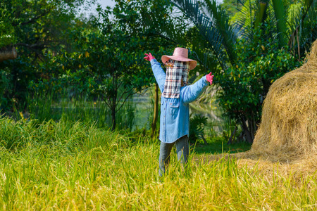 countrified: scarecrow in the rice field