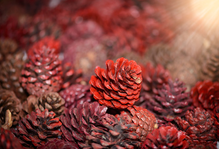 open up: Pine Cones nice and dry and some are open up, A red dye