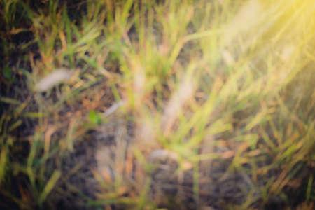 blurry: Green grass blurry background autumn season Stock Photo