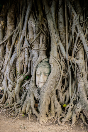 maha: Buddha Head Tree Wat Maha That (Ayutthaya). buddha statue trapped in Bodhi Tree roots. Ayutthaya historical park