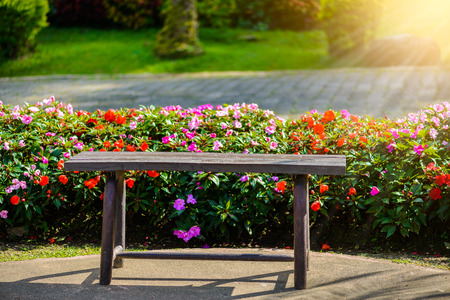 wooden bench in garden and Impatiens Walleriana Sultanii Busy Lizzie Flowers, Large Detailed , Magenta, Purple, Red, Pink, Divine New Guinea Balsam Sultana, Balsamina Balsaminaceae Flowering Plant Bed