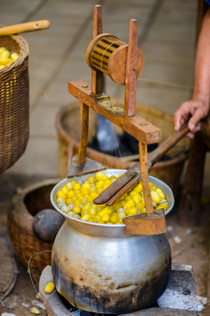 sericulture: The Traditional of Sericulture in Countryside, Thailand