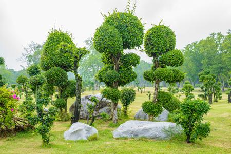 Ebony bonsai tree decoration garden in the park Stock Photo