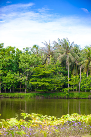 khan: The abundance of trees, blue skies and ponds at Sri Nakhon Khuean Khan Park and Botanical Garden. Bang krachao, Phra Pradaeng, Samut Prakan, Thailand