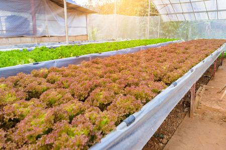 水耕成長水土壌なしで植物を供給するのにミネラル栄養解決を使用します。野菜水耕園芸システム温室効果を持つ。 写真素材 - 92648136