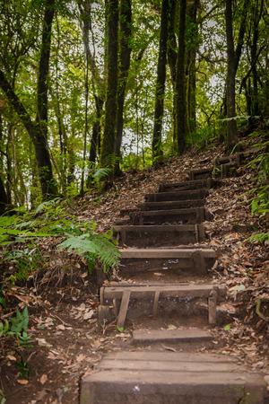 Kew Mae Pan Nature Trail Trekking trail leading through jungle landscape of deep tropical rain forest. Travel background at kew mae pan Doi Inthanon Park, chiang mai, Thailand