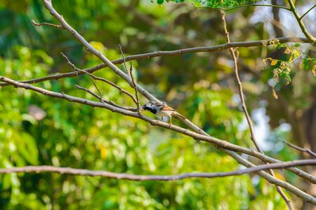 House sparrow perched on a tree branch in nature Stock Photo