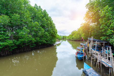 Forest of Mangroves in Tung Prong Thong or Golden Mangrove Field at Estuary Pra Sae, Rayong, Thailand