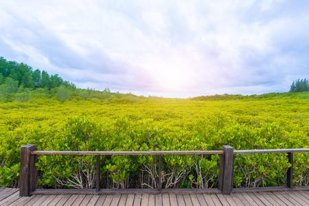 Viewpoint of Mangroves in Tung Prong Thong or Golden Mangrove Field at Estuary Pra Sae, Rayong, Thailand Фото со стока