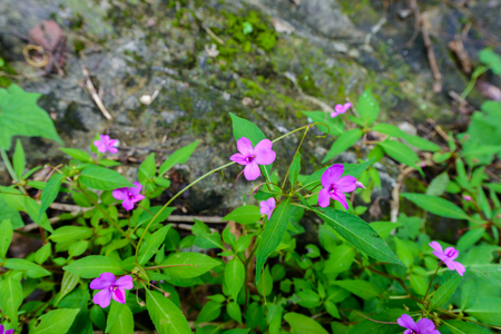 Small purple flowers in the forest.
