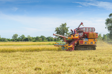 Combine harvester Working on rice field. Harvesting is the process of gathering a ripe crop from the fields in thailand Standard-Bild