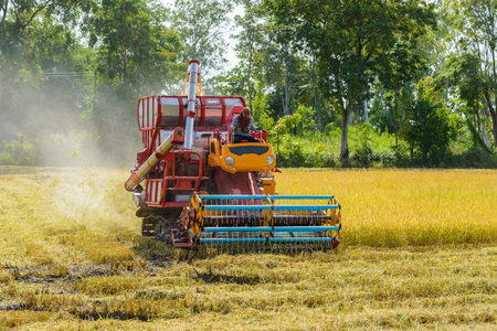 Combine harvester Working on rice field. Harvesting is the process of gathering a ripe crop from the fields in thailand Stockfoto