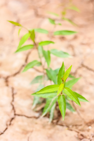 viewfinderchallenge3: Small plant on pile of soil Stock Photo
