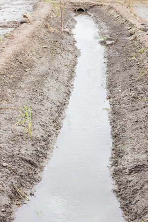 watercourse: Rice are growing and watercourse reasserted