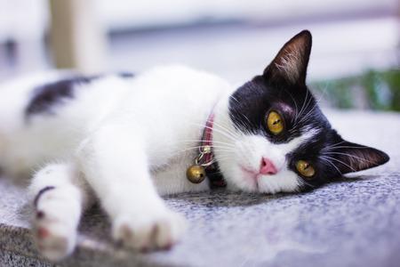 white cat: Black & White cat Stock Photo