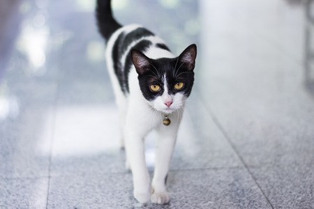 Black & White cat Stock Photo
