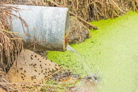 tuberias de agua: aguas residuales que ejecuta lentamente de una tuber�a de hormig�n directo a un estanque natural con hierba verde en el banco y la luz helecho peque�o mosquito verde en la superficie del agua