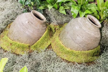 anforas: cáscara de coco Osa Mayor y olla de barro con el musgo verde en madera Foto de archivo