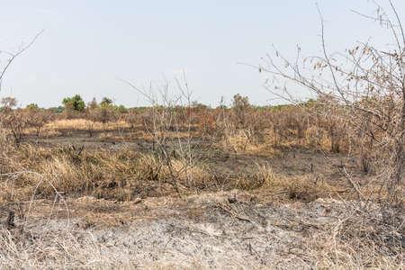 smut: ash black smut and stubble. Burned field farm concept