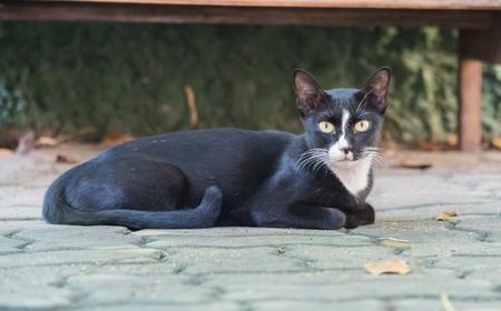 Portrait of a young black cat. 版權商用圖片