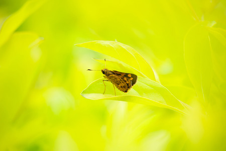 Beautiful butterfly is standing on leaves under sunrise light in the morning.