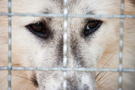 Lonely dog was trapped in cage and waiting for rescued from human. It's a pet that the best friend of human. 写真素材