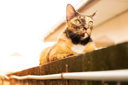 a relax adult tabby cat laying down on the wall. cat is cute and friendly pet for people. 写真素材