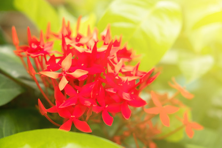 spike flower blooming under the sunlight of morning in summer. spike flower is outdoor plant to use for garden decoration 写真素材