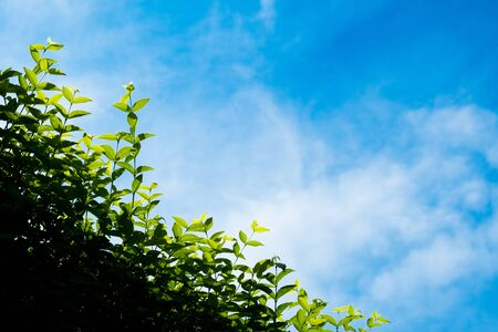 white cloud in beautiful clear blue sky with plant at frontend. it's sunny day in rainy season.