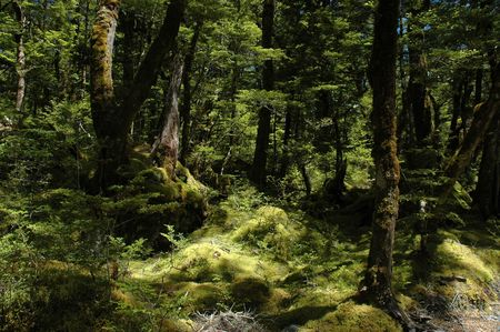 Untouched nature - ancient forest, green moss.