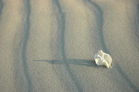 Beautiful white spiral shell on whie sand - pure nature, untouched world