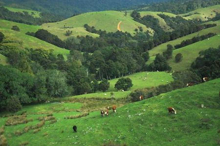 Idyllic view of farm land with green hills, forest and cows.