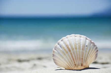 scallop shell: Beach concept. Sea shell with ocean on background.