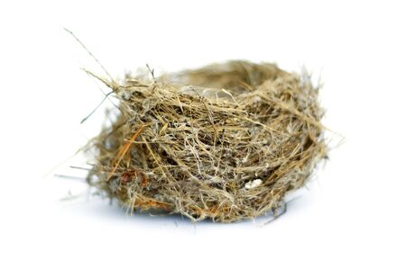 Real birds nest isolated over white.