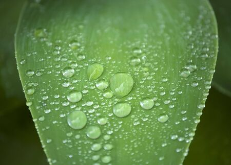 Water drops on leaf. Freshness and nature concept
