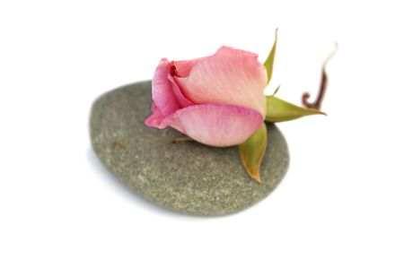 Rose bud on stone pebble spa objects. Isolated over white