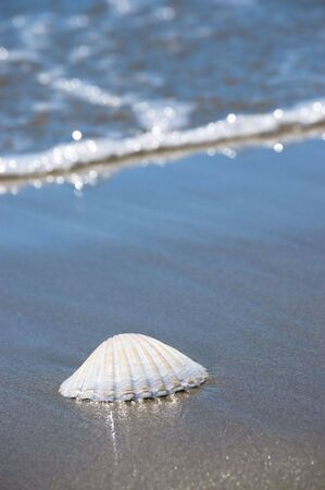 Beach concept. Sea shell with ocean wave on background. 版權商用圖片
