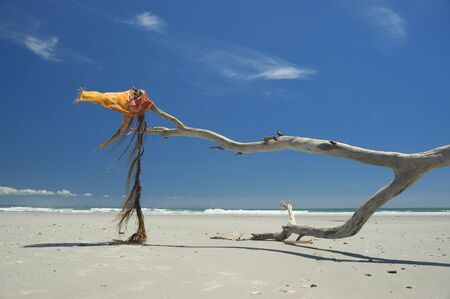 Empty ocean beach. Dry tree branch with pareo like flag on wind 版權商用圖片