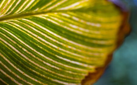 Green leaf with veins. Close-up. Horizontal