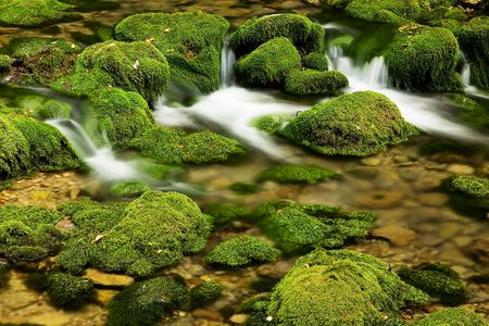 The mountain river flows on the stones covered by a bright green moss photo
