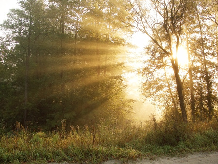 reminding: The bright beams of the sun reminding a crown, make the way through trees in a morning wood Stock Photo