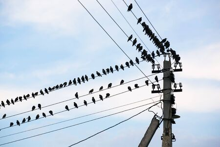 utility pole: Many birds sit on wires on a background of the blue sky with clouds Stock Photo