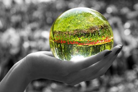 esfera de cristal: Abstracci�n. La esfera de cristal, establece en una palmera. El resultado brillante jard�n con tulipanes es visible en la esfera. Todos los dem�s - es decoloured y borroso.
