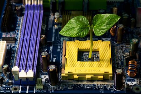 immature: Baby plant making the way through a computers motherboard. Shallow depth of field. The concept -  nature or life against computer.